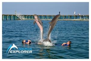 dolphinexplorerexcellence