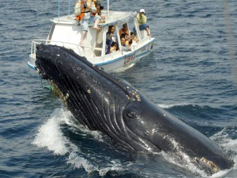 humpback-whale-watching